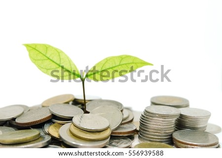 Plant Growing In Savings Coins. Investment or education Concept.