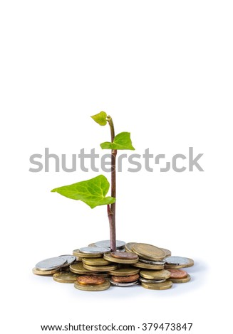 plant growing on coins isolated on white