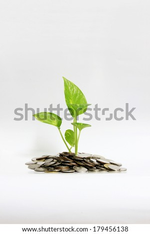 plant growing out of coins
