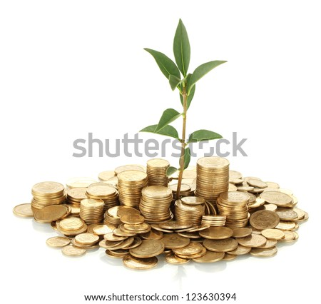 plant growing out of gold coins isolated on white - stock photo