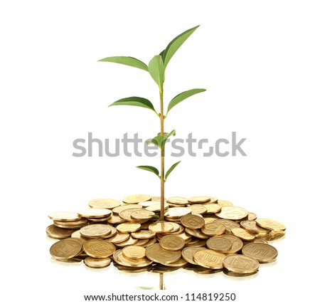 plant growing out of gold coins isolated on white background close-up - stock photo