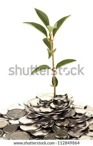 plant growing out of silver coins isolated on white background close-up