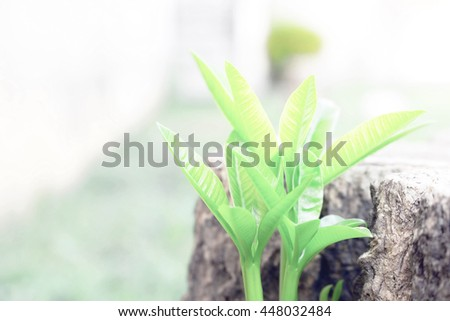 Plant  growing, seed, tree, sprout, soil, new, beginning, growth, green, young, bud, water, leaf, small, root, ground, concept, farm, stem, land, one, dirt, life, agriculture, spring, environmental - stock photo