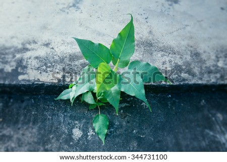 Plant growing through crack in pavement - stock photo