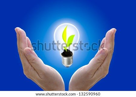 Plant grown in the light bulb and protect by hand