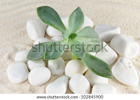 Plant grows on stones and sands