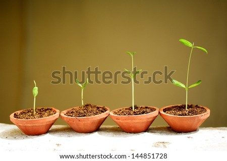 Plant growth - Baby plants in small pots - stock photo