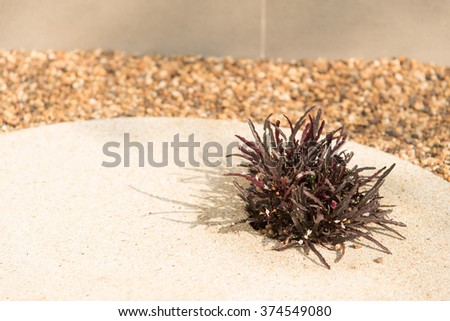 Plant growth in slab of stone in stone park. - stock photo