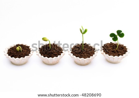 Plant growth-Satage of plant progression - stock photo