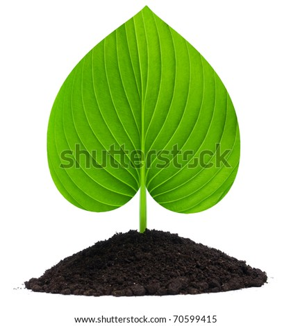 Plant-heart and soil, isolated on white background - stock photo