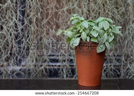 plant in a boxwood  pot  - stock photo