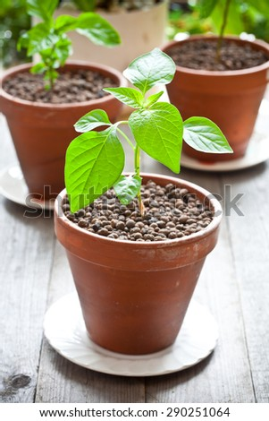 Plant in a clay pot - stock photo