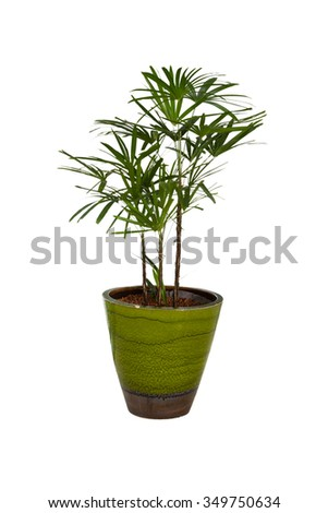 Plant in a flower pot on white isoalte background (Clipping path).