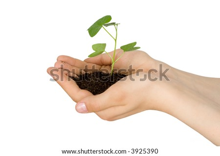 Plant in a hand of the child on an isolated background