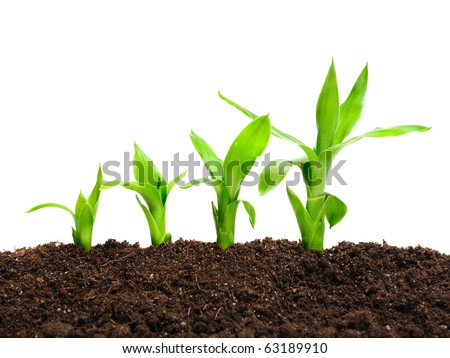 plant in a row in the soil - stock photo