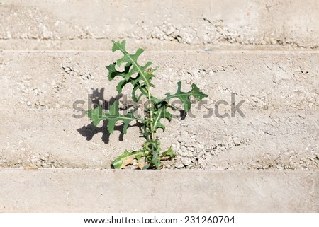 plant in concrete - stock photo