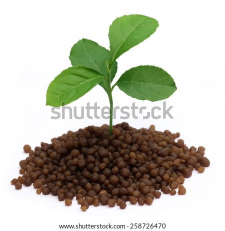 Plant in Diammonium phosphate fertilizer over white background - stock photo