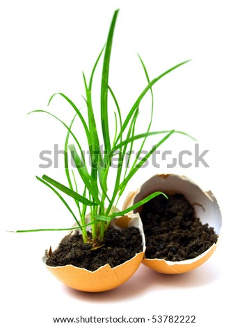 plant in egg - stock photo