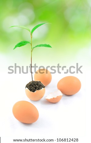 plant in egg with green background - stock photo