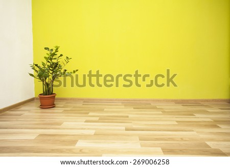 Plant in green room - stock photo