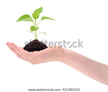 Plant in hand isolated on white background.