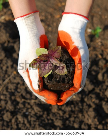 plant in hand over soil background (focus on plant) - stock photo
