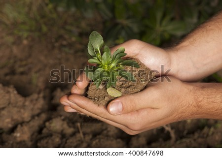 plant in hands grass background - stock photo