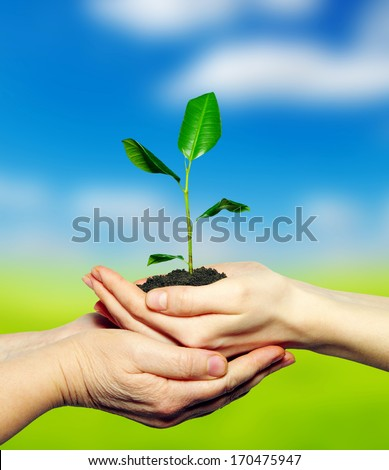 plant in hands on  field background