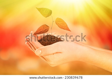 Plant in hands on light blue background