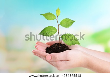 Plant in hands on light blue background - stock photo