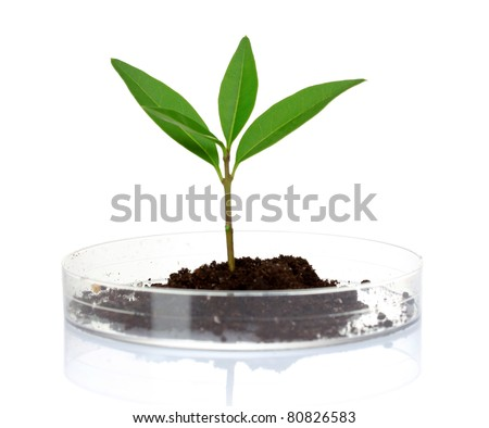 plant in laboratory isolated on white - stock photo