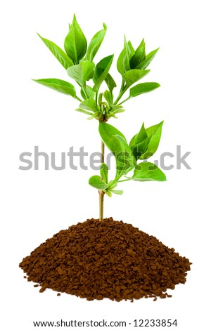 Plant in land, isolated on white background - stock photo