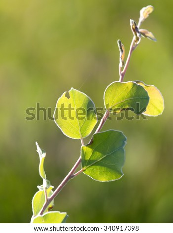 plant in nature - stock photo