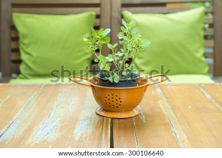 plant in pot on the wood table