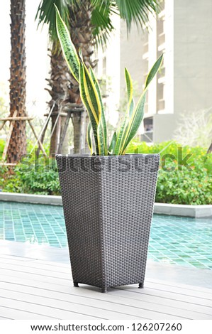 Plant in rattan flower pot by the pool - stock photo