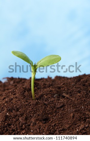 plant in soil growing sky as background - stock photo