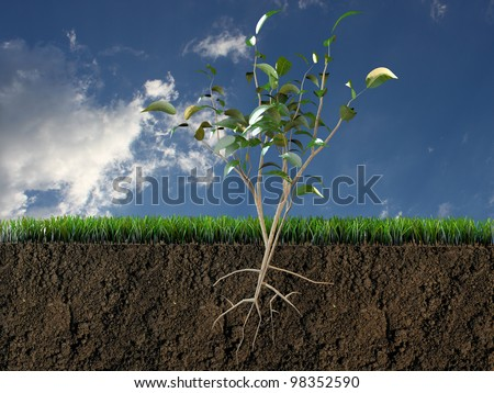 plant in soil section