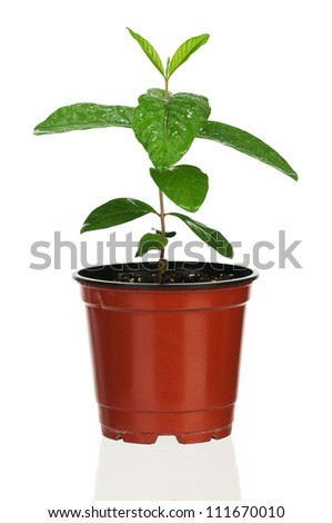 Plant in the flowerpot isolated on white background - stock photo