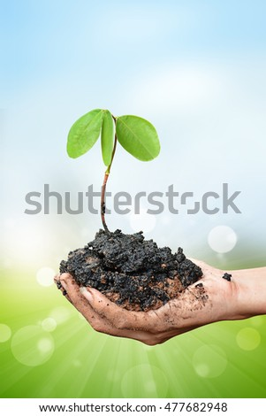 plant in the hand on blur bokeh background