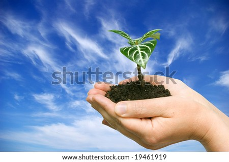 plant in the hand on sky background