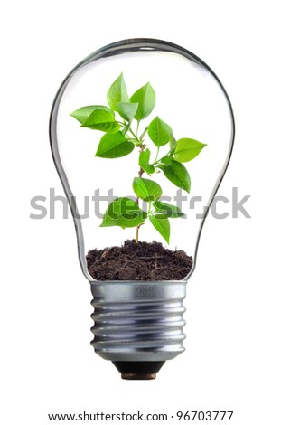 plant in the lamp on the white background