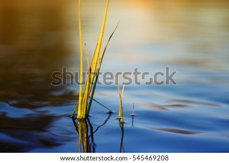 plant in the river