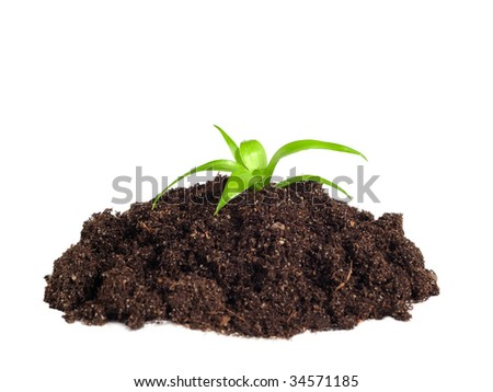 plant in the soil