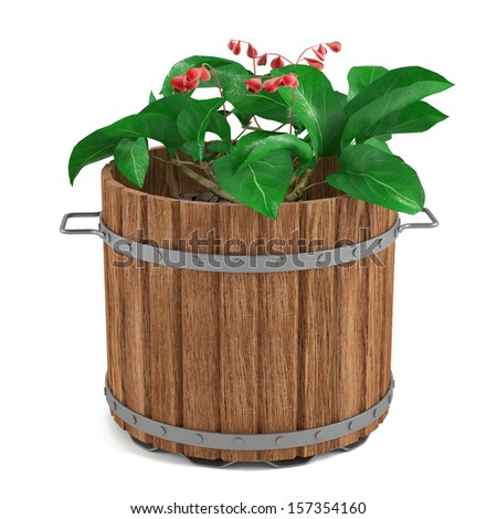 Plant in the wooden barrel
