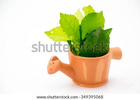 Plant in watering pot on white background  - stock photo