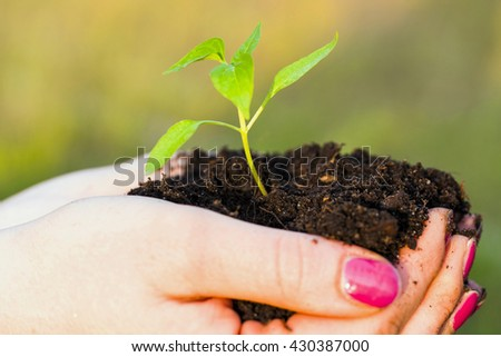 Plant in woman hands - grass background