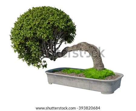 plant iSolated Collection bonzai