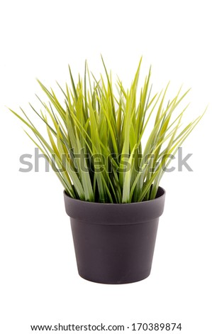plant isolated in white background