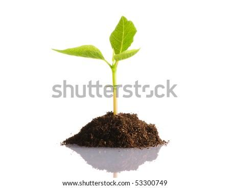 Plant isolated on white background - stock photo