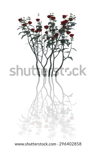 plant  iSolated reflection Collection